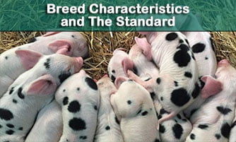Breed Characteristics and the Standard