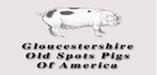 Gloucestershire Old Spots of America